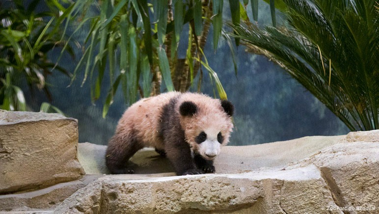 vente privee zoo beauval